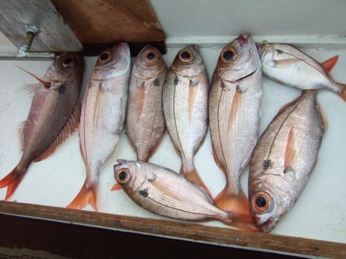 морская рыбалка аланья